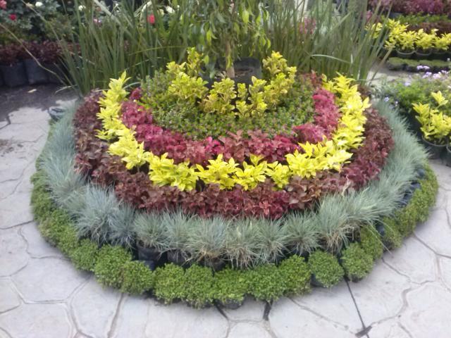 Vivero xochimilco jardineria xochimilco for Jardineros en xochimilco