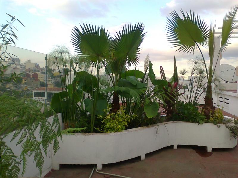 Vivero palapas xochimilco jardineria xochimilco for Jardines pequenos esquineros
