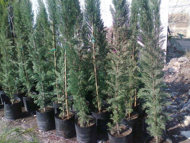 Cipres jardineria xochimilco for Jardineros en xochimilco
