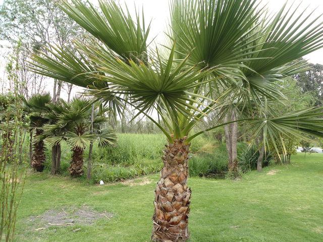 Palma real jardineria xochimilco for Jardineria xochimilco
