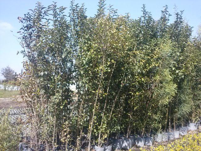 Trueno verde jardineria xochimilco for Jardineria xochimilco