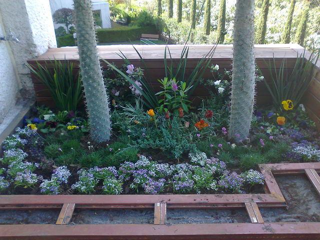 Esquinero con palma de madascar jardineria xochimilco Jardineria xochimilco