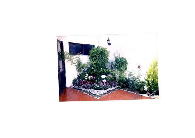 Esquinero plantas diferentes jardineria xochimilco Jardineria xochimilco