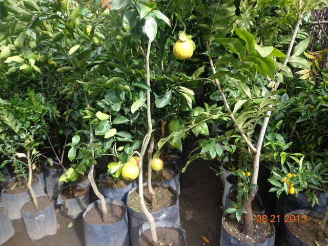 Jardineria xochimilco for Jardineros en xochimilco
