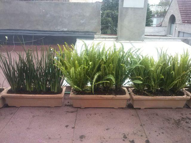 Sin nombre jardineria xochimilco for Jardineria xochimilco