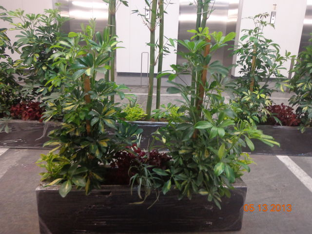 Jardinera de fibra de vidrio bamb aralia arbolicola y fornio jardineria xochimilco - Jardineras de fibra de vidrio ...