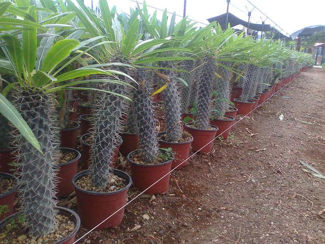 Palma 1 2 jardineria xochimilco for Jardineria xochimilco