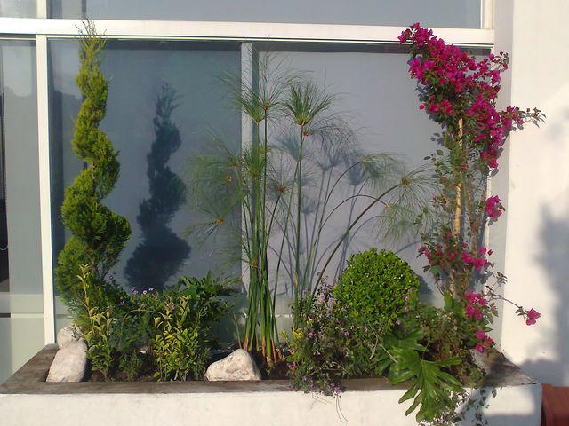 Plantas de sol jardineria xochimilco for Jardineros en xochimilco
