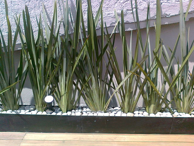 Fornios jardineria xochimilco for Jardineros en xochimilco