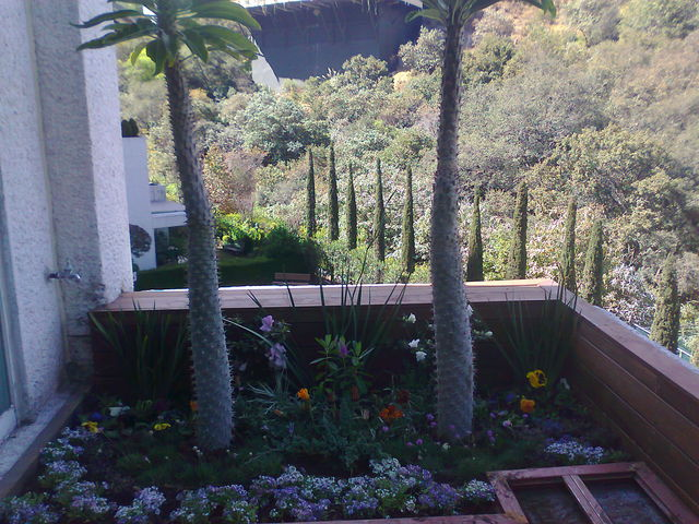 Arreglo con palma de madascar jardineria xochimilco Jardineria xochimilco