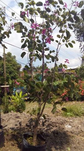 Pata de cabra jardineria xochimilco for Jardineros en xochimilco
