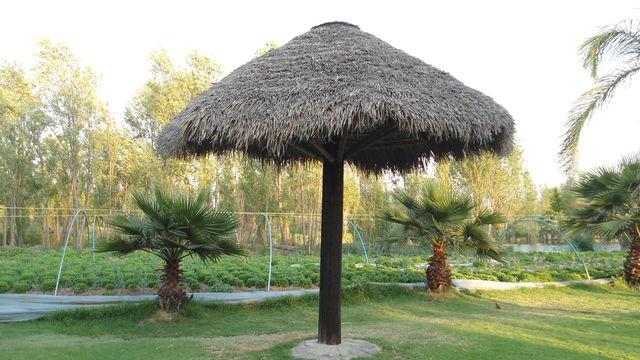 Palapa con forma de sombrilla jardineria xochimilco for Jardineros en xochimilco